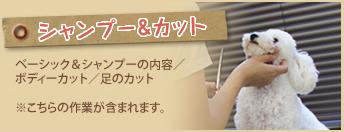 シャンプー&カット(ベーシック&シャンプーの内容/ボディーカット/足のカット)