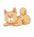 人見知りのペットでも大丈夫ですか?│三木市の犬・猫お泊り・一時預かり「ペットシッターバウ」