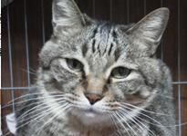 猫│三木市の犬・猫お泊り・一時預かり「ペットシッターバウ」