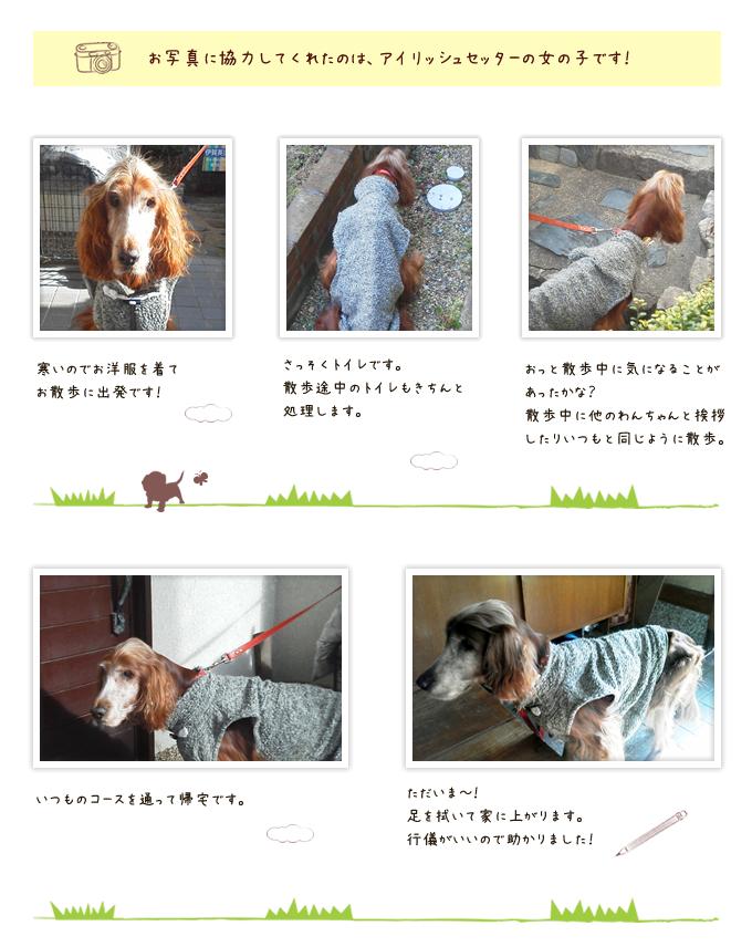 当日の様子をレポート│三木市の犬・猫お泊り・一時預かり「ペットシッターバウ」
