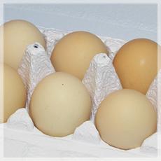 こだわり1.『卵』