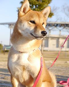 Sunny Dog Schoolしつけ・訓練の大切さ