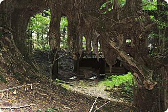 常瀧寺の大公孫樹
