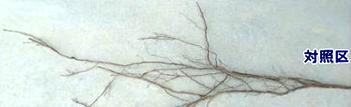 根の比較 バクタモン