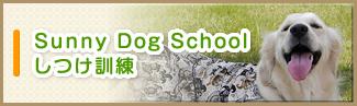 Sunny Dog Schoolしつけ訓練